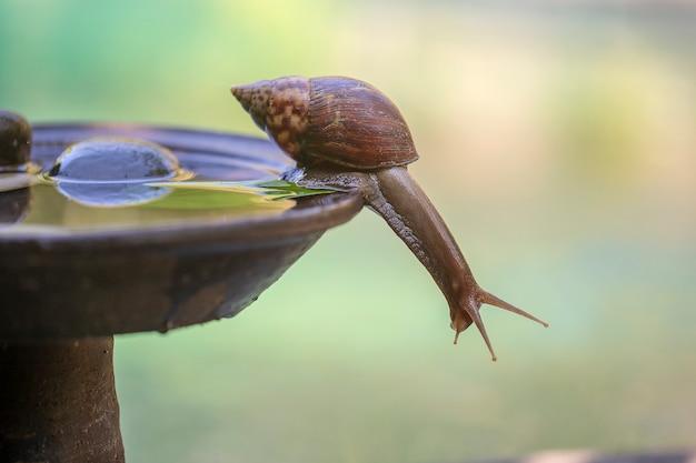 シェルのカタツムリが水でセラミックポットを這う、庭で夏の日