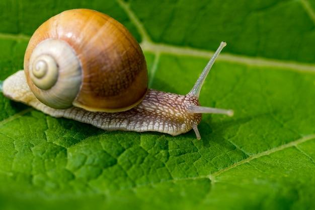 녹색 잎에 정원에서 달팽이