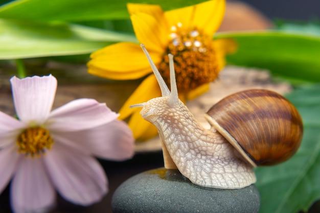 カタツムリは自然の中を活発に這っています。