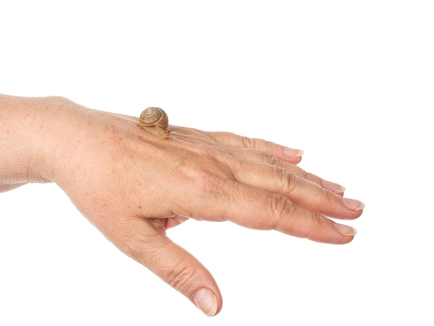 A snail is crawling along a woman's hand. cosmetic product made from mucin snail mucus. rejuvenation. isolated.