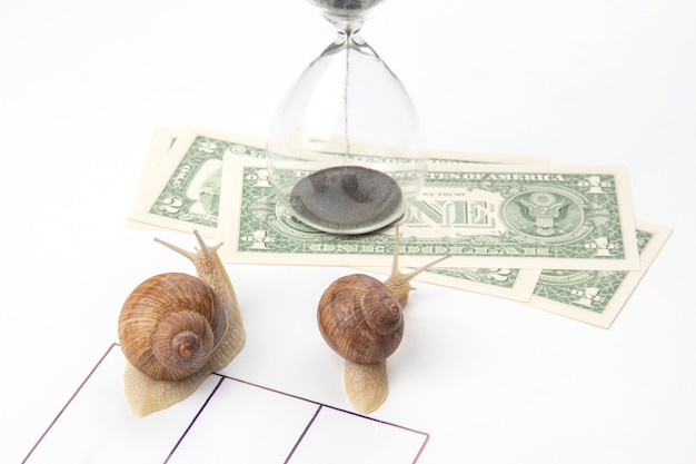 The snail is in a hurry to win in speed for the right to receive money.