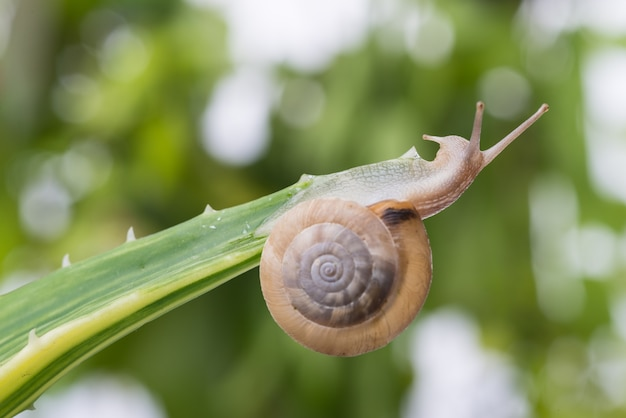 Snail in a leaf
