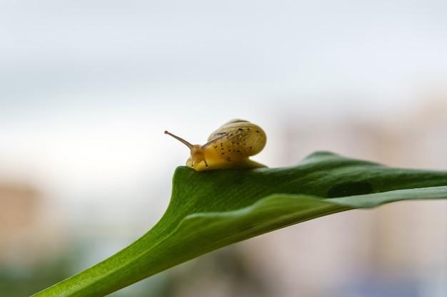 안개 낀 흐릿한 배경에 있는 식물의 잎에 있는 동안 카메라를 보고 있는 달팽이