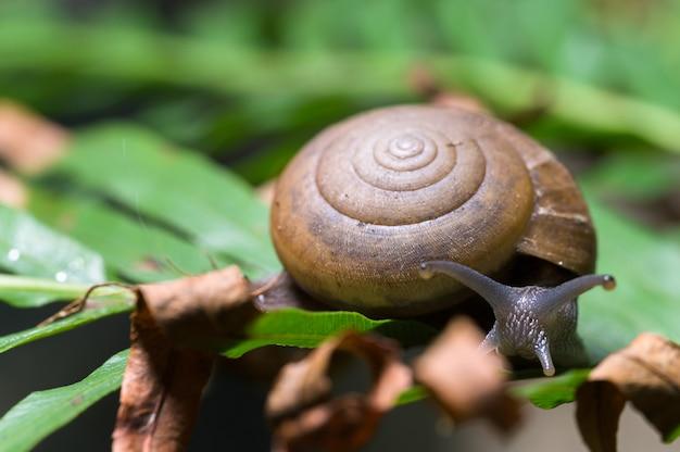 자연 속에서 나무에 달팽이 매크로