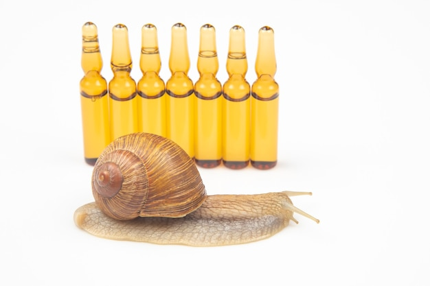 Snail and medical ampoules for injections. mollusc and invertebrate. delicacy meat and gourmet food.