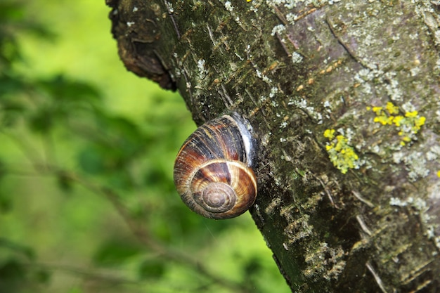 The snail in the mountains of the caucasus, armenia