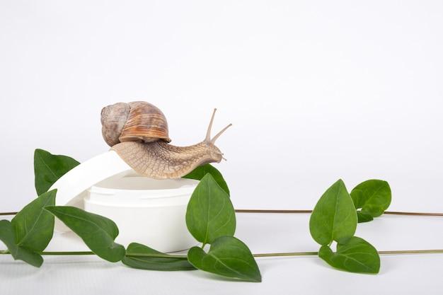 흰색 바탕에 복사 공간이 있는 달팽이 점액 화장품.