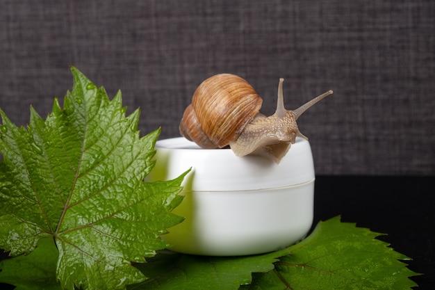 달팽이 점액 크림, 피부 관리를 위한 유기농 화장품.
