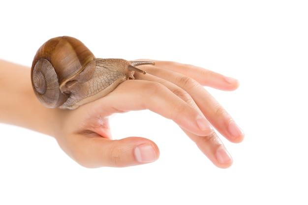 흰색 배경에 고립 된 아름다움 여자 손에 달팽이.