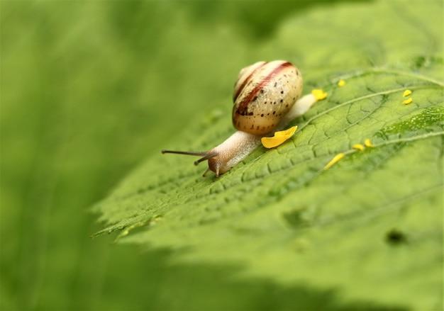 풀밭에 달팽이