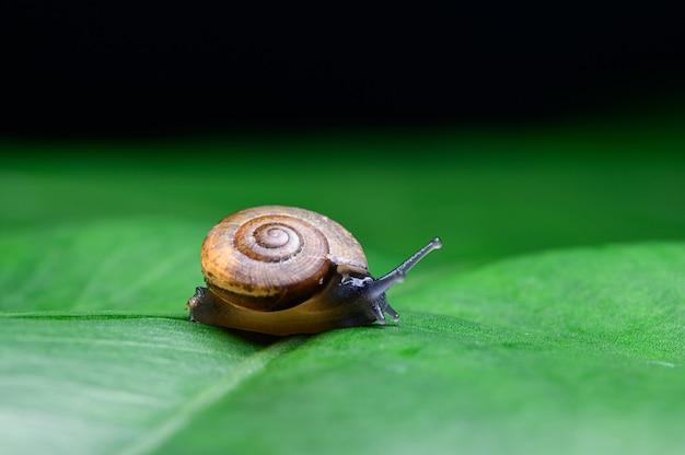 잎에 달팽이