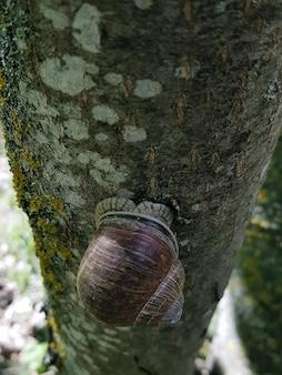 Улитка на дереве в саду. улитка скользит по мокрой деревянной текстуре