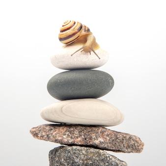 돌 피라미드 위에 달팽이. 연체 동물과 무척추 동물. 진미 고기와 음식