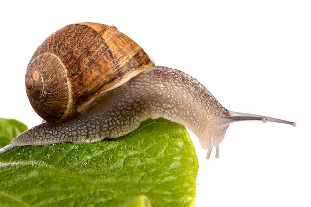 화이트에 달팽이