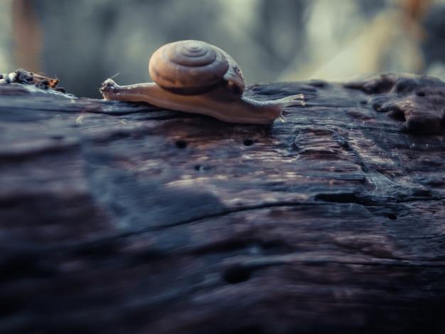 나무에 달팽이
