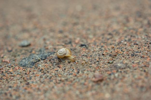 Snail on sand