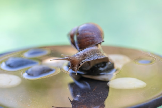 A snail in a shell crawls on a ceramic pot with water, summer day in garden, close up, island bali, indonesia