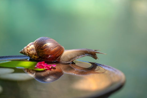Snail in a shell crawls on a ceramic pot with water, summer day in garden