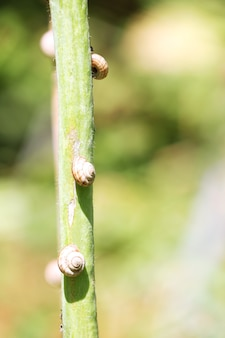 Snail shells on the stem
