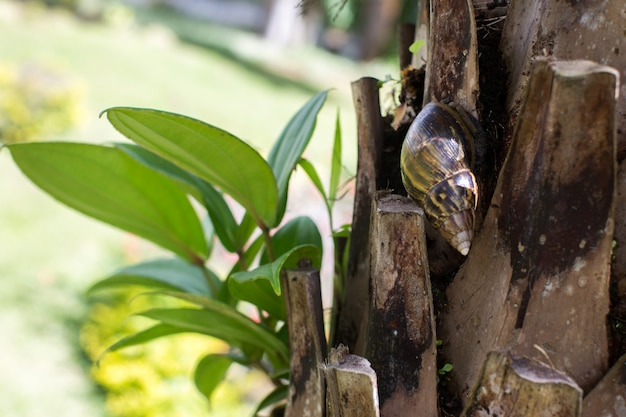 Snail sitting on the bark of a palm tree closeup.