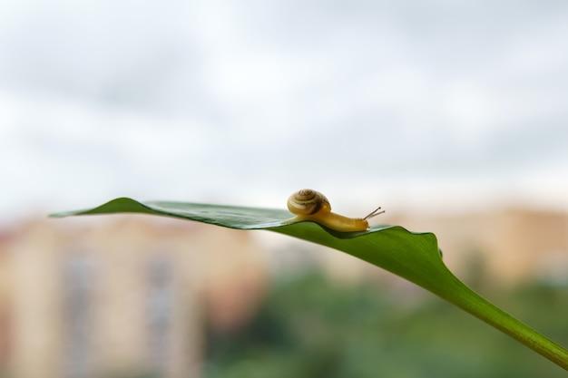 달팽이는 흐릿한 아침 배경에 나뭇잎에 천천히 기어갑니다