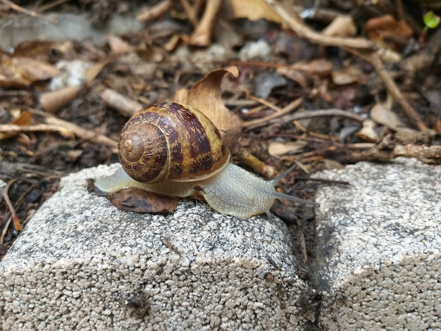 Snail on the stone in the forest