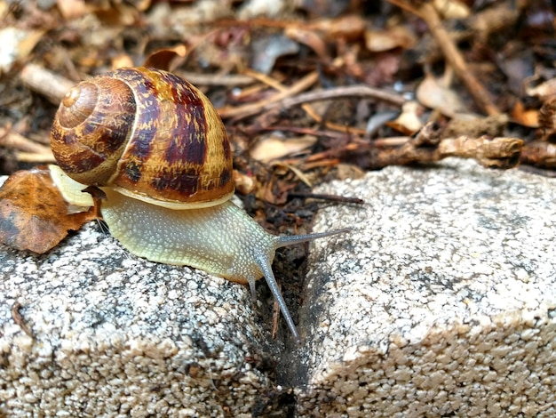 Snail on the stone in the garden