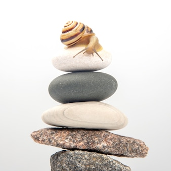 Snail on top of a stone pyramid. mollusc and invertebrate. delicacy meat and gourmet food