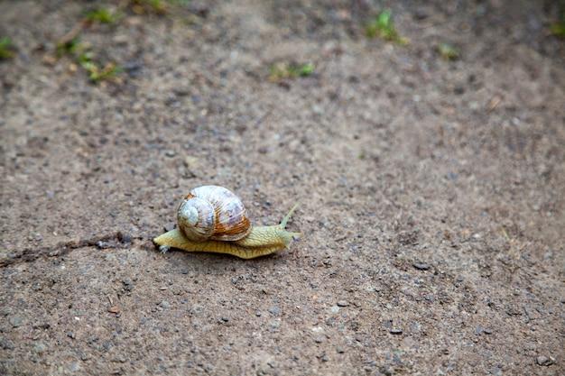 지상, 나선 pomatia에 금이 껍질과 달팽이