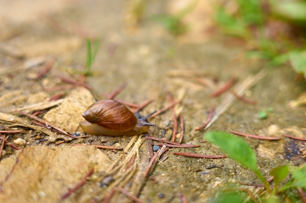 Snail with a house on a stone close up with a blurred background.