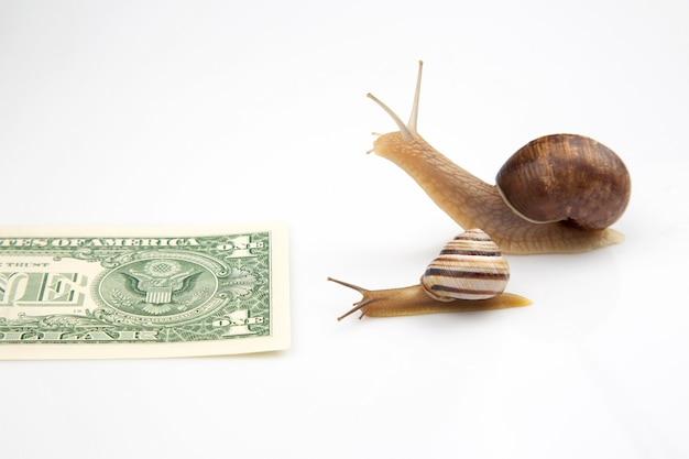 Улитки движутся к своей финансовой цели. медленная и упорная борьба за успех. финансы и скорость ведения бизнеса. метафора и концепция успешного бизнеса.
