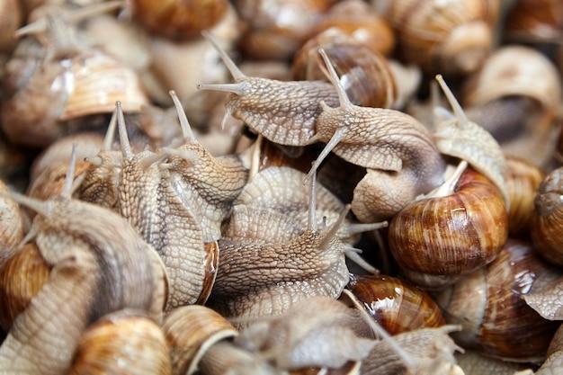 カタツムリは、大きな貝殻を持つ多くの活気のある這う庭のカタツムリにクローズアップします