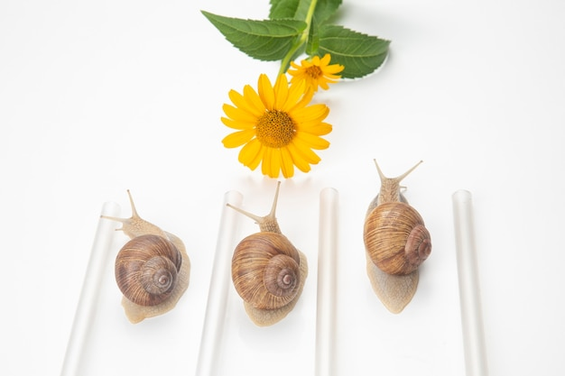 Snails compete to reach the yellow flower. mollusc and invertebrate.