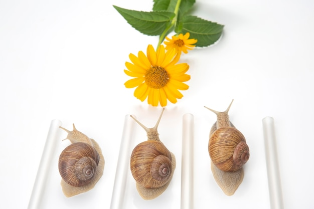 Snails compete to reach the yellow flower