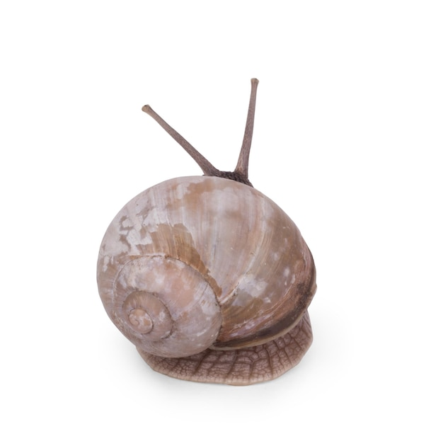 Snails face to face on a white background