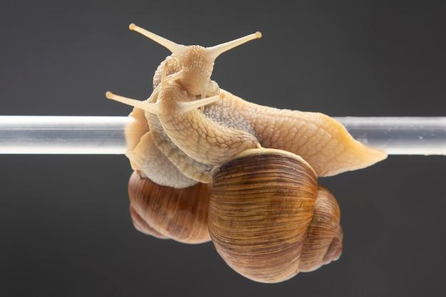 달팽이는 플라스틱 튜브에 매달려 있습니다. 동물계의 로맨스와 관계