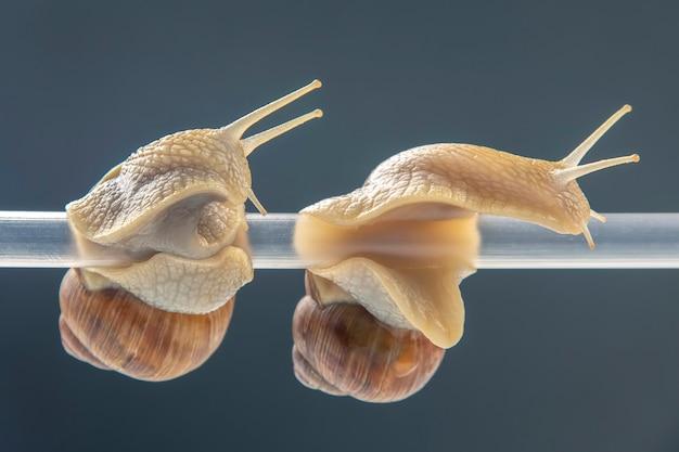 달팽이가 플라스틱 튜브에 매달려있다