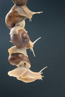 Snails hold each other with suckers. romance and relationships in the animal kingdom
