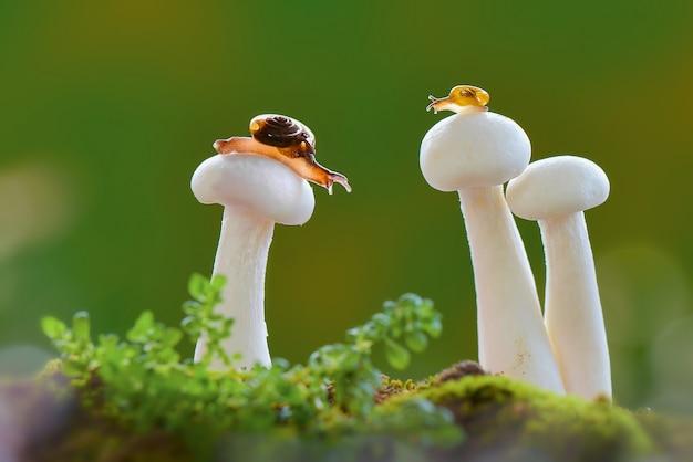 Улитки на грибах во время дождя