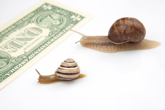 달팽이는 돈을 가지고 결승선까지 달려갑니다. 사업의 돌파구와 인내.