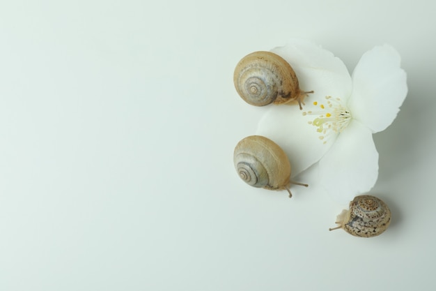 Snails with shell and flower on white background