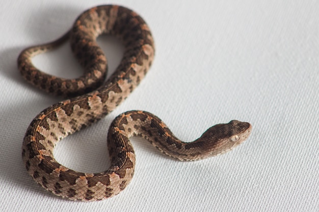 흰색 바탕에 뱀