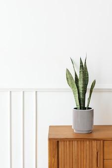 木製のキャビネットの灰色の植木鉢にヘビの植物