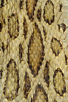 Snake skin reptile