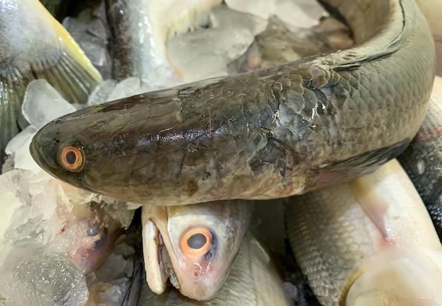 Рыба-змееголов (channa striata) в ледяном ящике