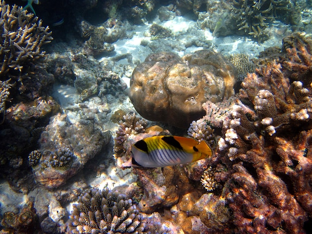 Snorkeling in the maldives islands