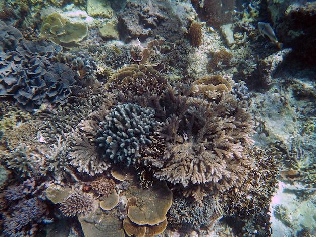 インドネシア、バリ島での水中シュノーケリング
