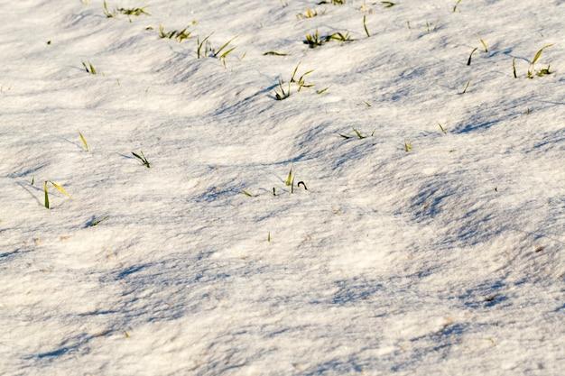 降雪後の雪