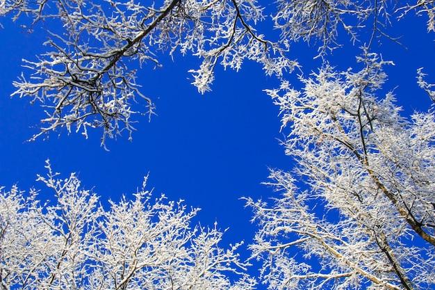 Снег и иней покрытые ветки деревьев в солнечный зимний день