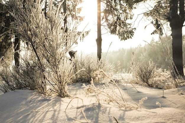 枝に雪と霜